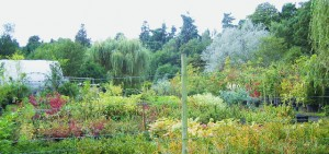 Felthorpe Forest Nursery